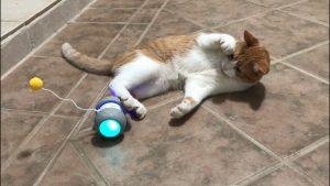 Top 10 Amazing Pet Gadgets